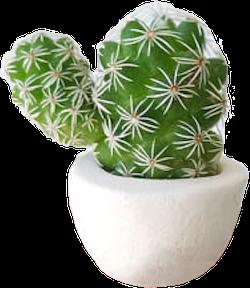 Tiny cactus asset